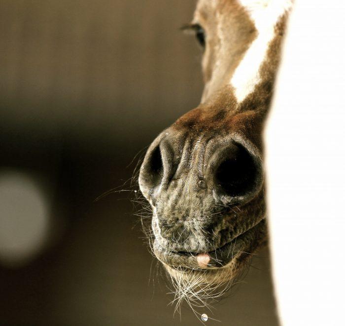 foaling program